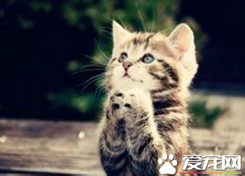 猫一年发情几次 母猫什么季节发情